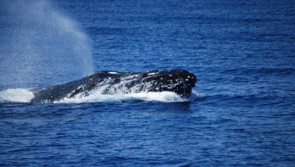 whale -kyle ellison