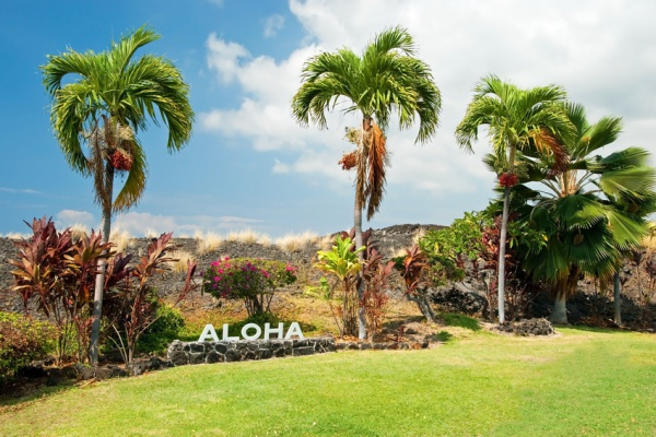 Aloha sign with palm trees on Big Island Hawaii