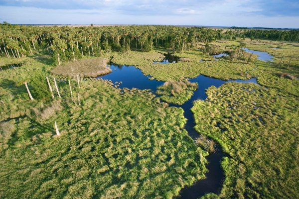 Aerial view of Florida Everglades